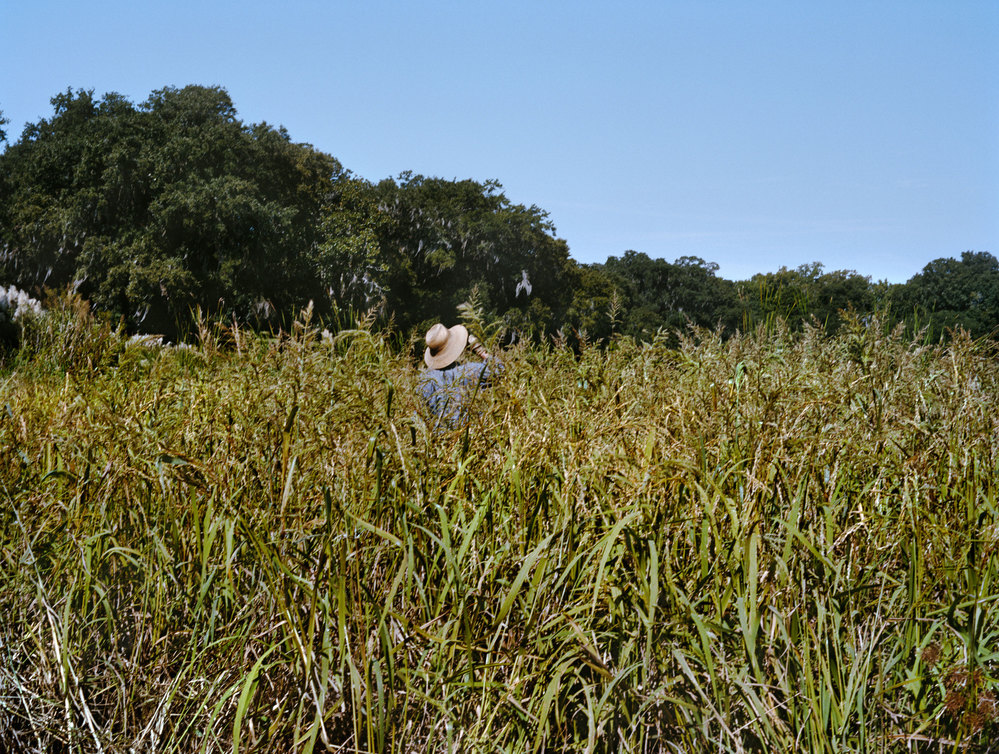 LOW COUNTRY Middleton Rice (I), 2013, C-print