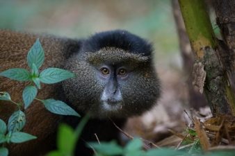 James Kobacker Primates