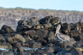 James Kobacker Galapagos