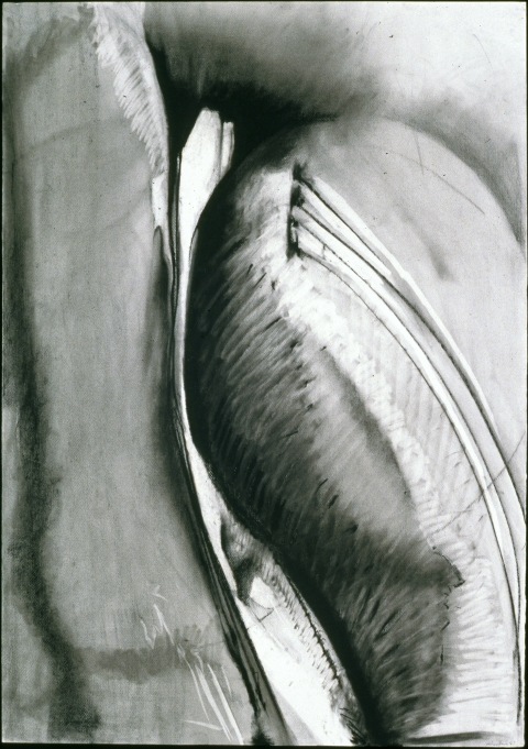 Jane Deering Gallery Mary Heebner Charcoal, graphite, ink on paper