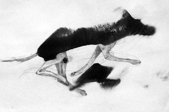 Janell O'Rourke Small Fury and other hybrid creatures ink blot and graphite on paper