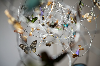 Jane McMahan Absence  Butterfly specimens from around the world, barbed wire and grass