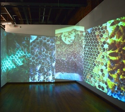 Jane McMahan Collapse Video Installation