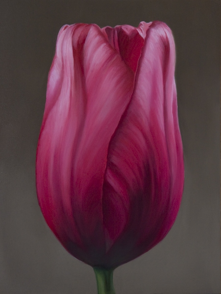 Archive Pink Tulip