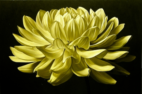 Archive Yellow Dahlia