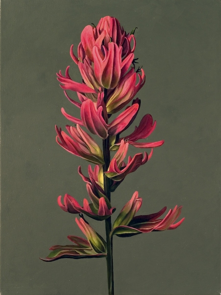 Archive Pink Paintbrush