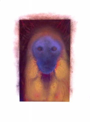 JAN HARRISON The Corridor Series Primates/Birds 2009-2011 pastel, charcoal, and ink on rag paper