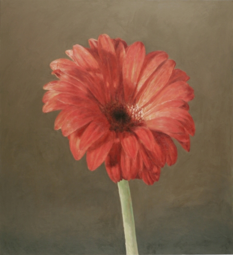 2006 Red Gerbera Daisy
