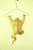Jeph Gurecka Sculpture/Taxidermy
