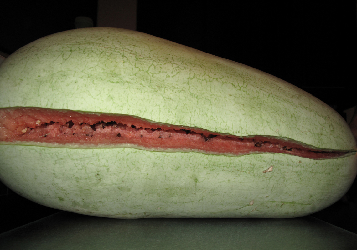 Jesse Morgan Barnett watermelon
