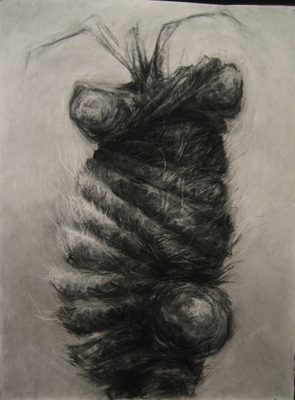 "Jillian Dickson (Ludwig) Charcoal Drawings: ""TUMORS, PLANTS""  Charcoal"