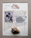 THE PARIS PROJECT Paper, photograph, conch shell