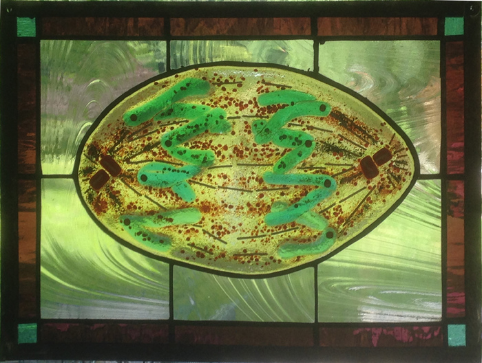 Bio-Stained Glass Replication (Anaphase of Mitosis)