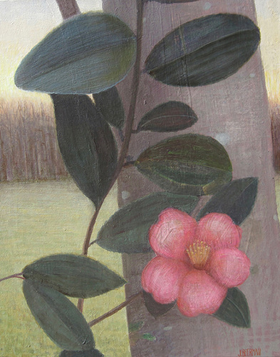 Chatwood Camellia at Twilight
