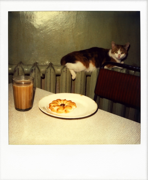 Russian Polaroids Leningrad tea with cat