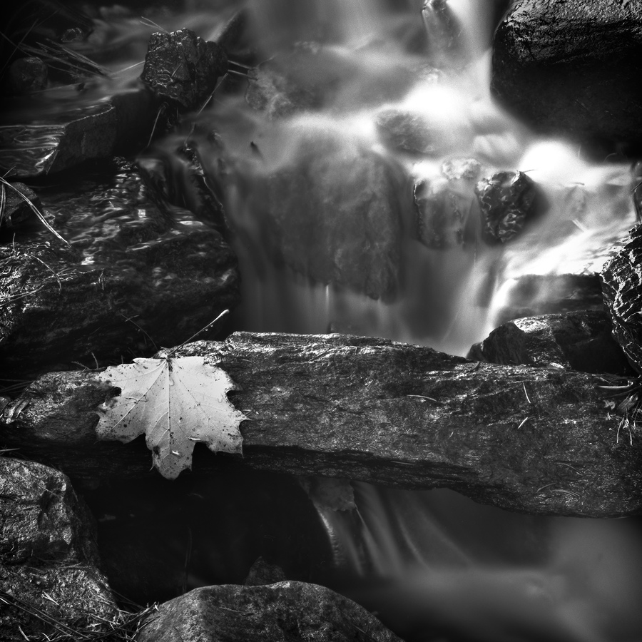 Landscapes Gallery Intimate Life of a Stream 2  ©