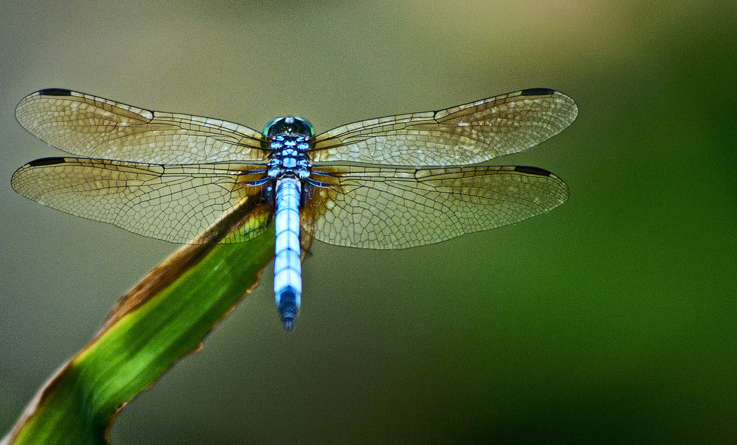 Landscapes Gallery Dragonfly  ©