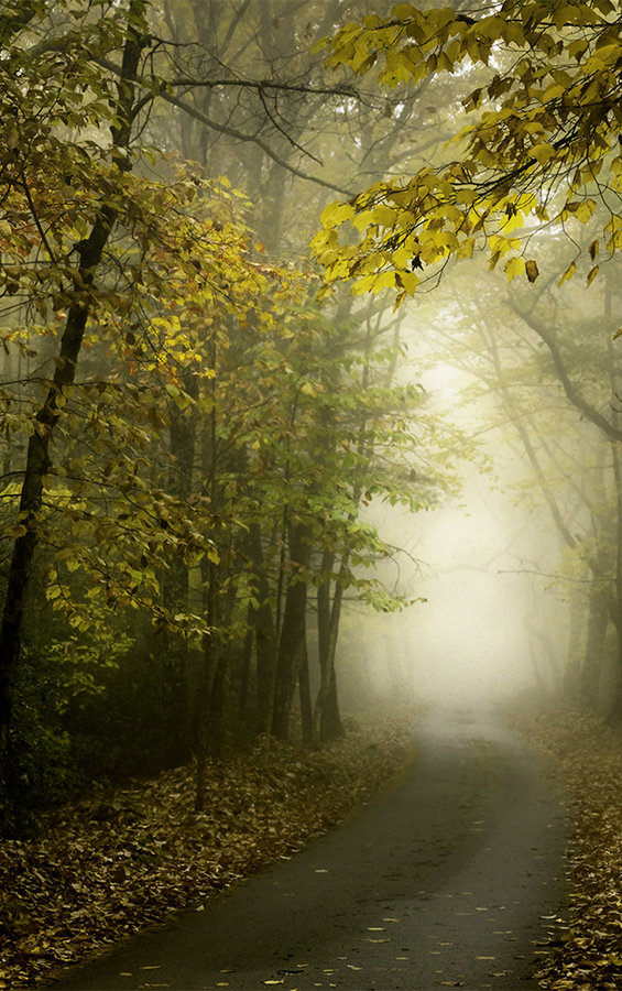 Theme and Variations on the Foggy Woods  A Path in the Woods  ©