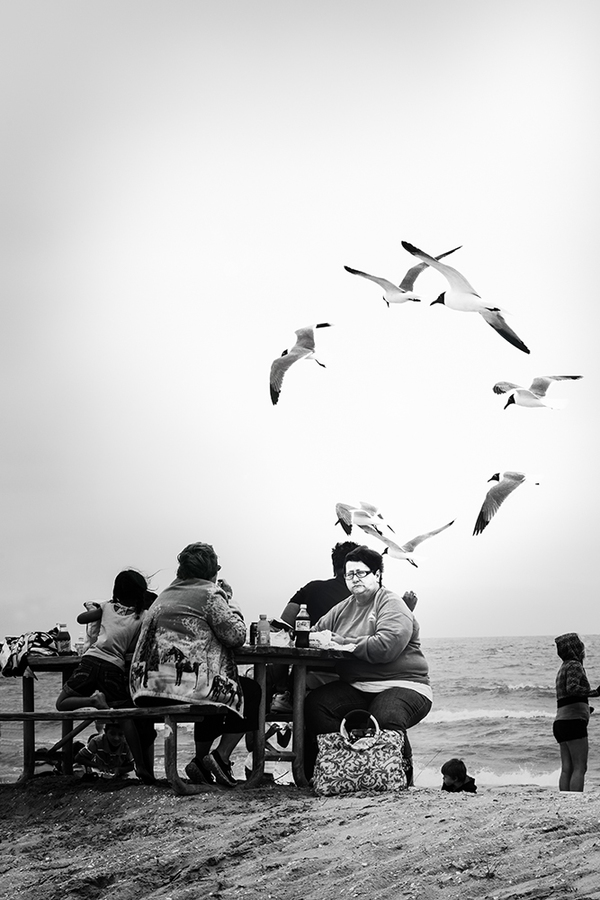 Conceptual Gallery   Assateague:  The Birds--Leave Me Alone  ©
