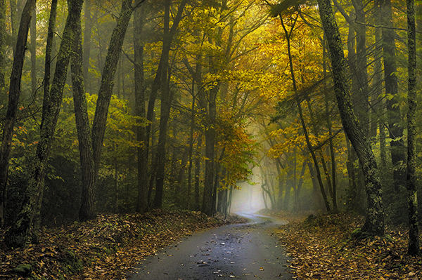 Theme and Variations on the Foggy Woods Into the Woods:  Along the Road  ©