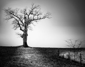 Winter Tree  ©