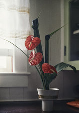 Japanese Arrangement in a Kurtistown Kitchen  ©