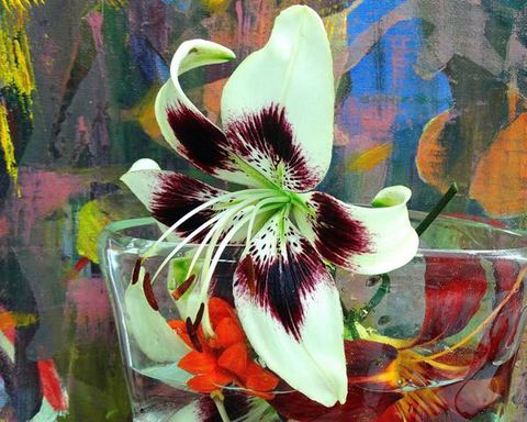 Karen A. Deutsch Flower Series Photograph