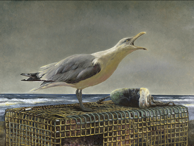 KARIE O'DONNELL Oils Herring Gull