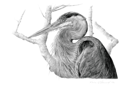 Karie O'Donnell Graphites Great Blue Heron