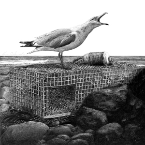 Karie O'Donnell Graphites Herring Gull