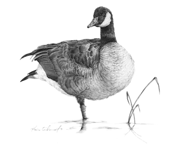 KARIE O'DONNELL Graphites Canada Goose
