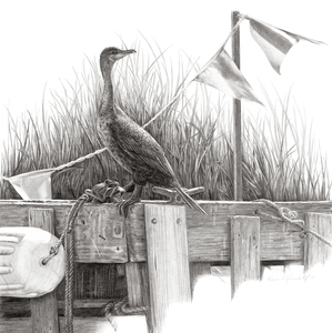 KARIE O'DONNELL Graphites Double-crested Cormorant