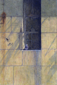 Karie O'Donnell Oils Rock Pigeon