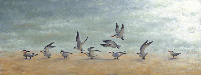 KARIE O'DONNELL Oils Royal Tern