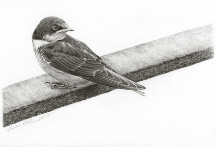 Karie O'Donnell Graphites Graphite