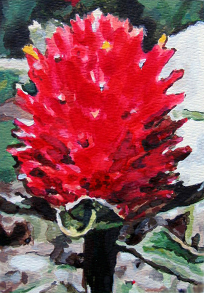 Paintings on Paper Gomphrena