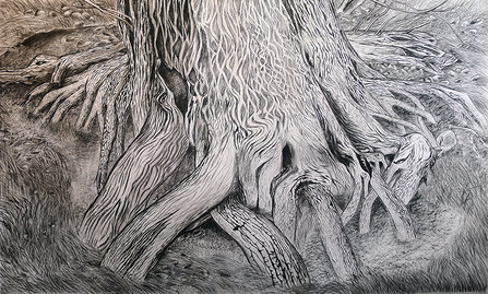 drawings Populus (cottonwood)