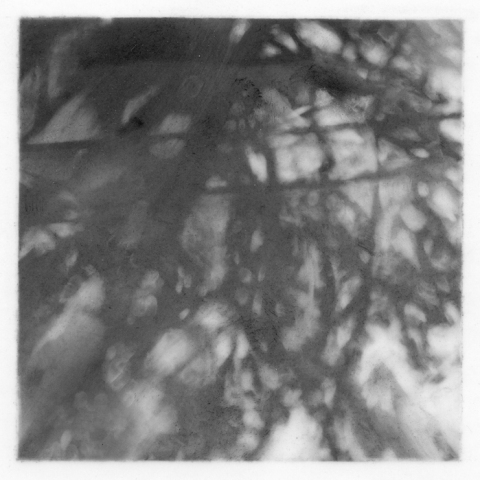 Leigh Ann Hallberg Trees Graphite on Mylar