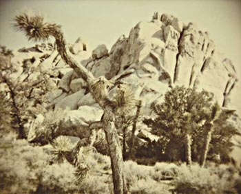 laura p krasnow joshua_tree Polaroid, Digital Photography