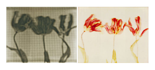 laura p krasnow art_is_science_made_clear - jean_cocteau Polaroid, Digital Photography