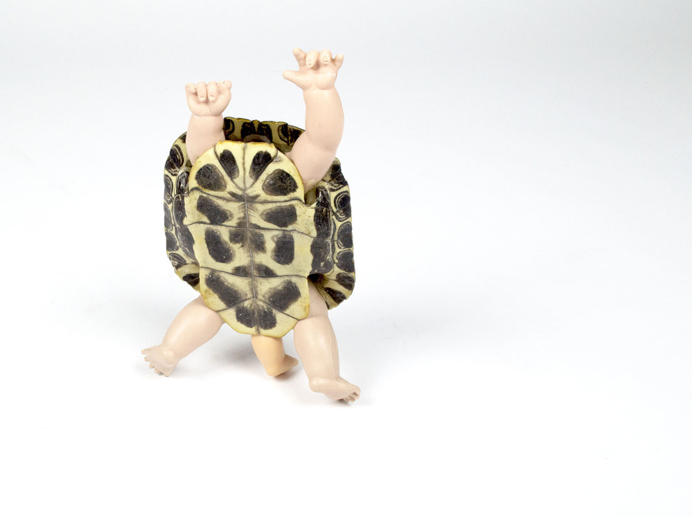 Humanimals Human turtle (baby)