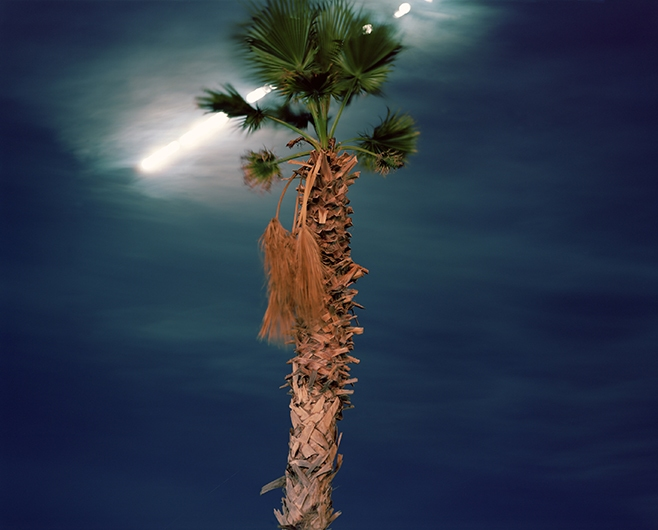 MOON STUDIES - MOTION PICTURES Palm Tree