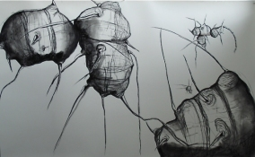 Lauren Kendrick Sleat Drawings 2004-2016 charcoal on paper