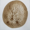 Other Natural Wonders walnut ink on paper