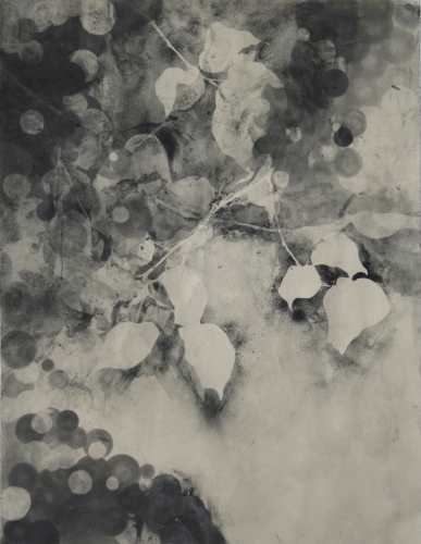 Lee Emma Running Botanical Drawings Graphite on Paper