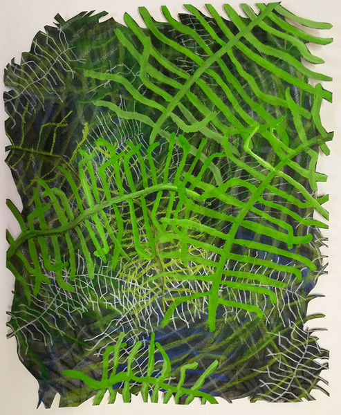 drawings Coral Fern