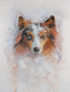 DOG PORTRAITS pastel, gouache on paper