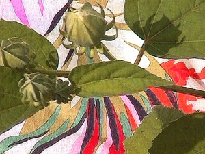 Leslie Alexander flora piment ink on canvas
