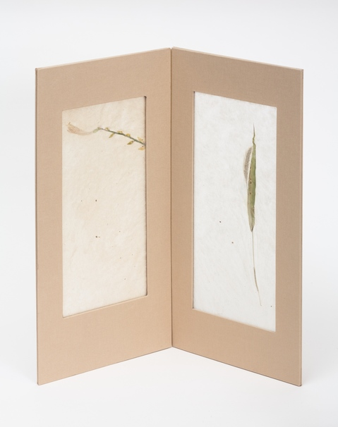 Paper and Light/ Botanicals Translucent II