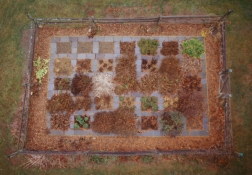 Linda Stillman Botanicals Piezo-Dye print of photograph of land art installation